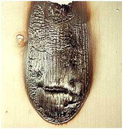 BBT Holzbrandschutz